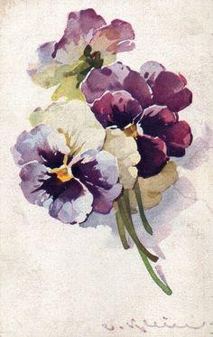 Catherine Klein pansies