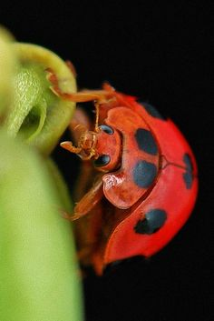 Not all beetles are adore, however, this lil lady works to save your food for you, the un-chemical way.
