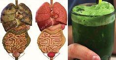 Súper batido verde de desintoxicación que eliminará todas las toxinas y grasa de tu cuerpo - ConsejosdeSalud.info