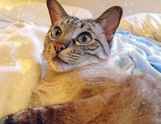 Cat Kisses by Memories by Jules, via Flickr