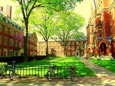 Freshman dorms at Harvard in Harvard Yard.