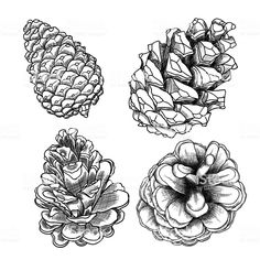 Christmas Tree Drawing Pine Cones 30 Ideas For 2019 Christmas Sketch, Christmas Tree Drawing, Botanical Art, Botanical Illustration, Pine Cone Drawing, Conifer Cone, Observational Drawing, Free Vector Art, Vector Hand