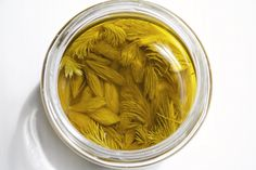 Spruce tips infused oil - makes a lovely infused oil for a fragrant vinaigrette - or can be used to spike mayonnaise, cookies, breads, cakes. Spruce Tips, Country Bread, Infused Oils, Wild Edibles, Recipe Instructions, Sunflower Oil, Drying Herbs, New Flavour, Fresh Herbs