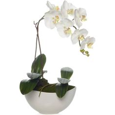 Potted Phalaenopsis by Z Gallerie