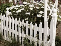 Daisies,Picket Fence