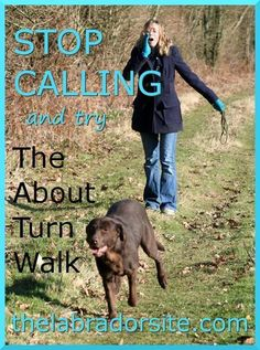 Find yourself calling repeatedly without your dog noticing? Try the About Turn Walk.