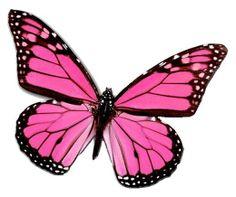 PlexusPinkButterfly tattoo idea to represent Mikayla on white daisy