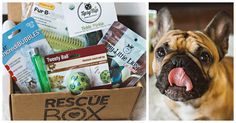 Itâ��s no secret that we love our dogs here at The Animal Rescue Site. Recently, some of our staff decided to spoil their furry friends with the ultimate gift: a RescueBox. These gift boxes, delivered monthly, contain hand-picked treats, toys and chews for owners to spoil their dogs or cats with on the regular. Our favorite part: each box also gives at least 5 pounds of food and 2 vaccinations to shelter pets in need â�� the more you order, the more they give. No other subscription service…