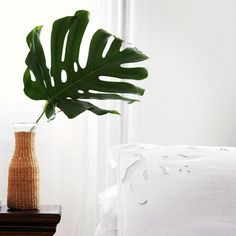 The split leaf philodendron is a favorite of ours for adding a little green to a room- pop a leaf or two in a pretty vessel and you have the impact of a plant, in a more compact form. As gorgeous as a single leaf can be, bring in a full split leaf philodendron plant and you've got a major visual...