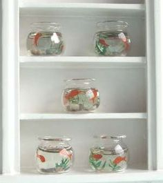 a-mini-a-day:    Miniature fish bowls.  Miniature fish bowls.  MINIATURE FISH BOWLS.