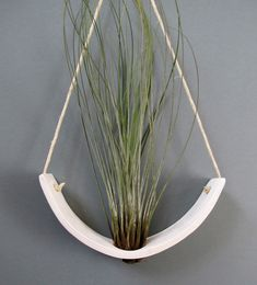 Hanging Air Plant Cradle (tm) - Free Air Plant with any pod or planter purchase through March!