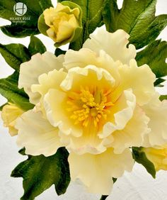 Open peony | Flickr - Photo Sharing! Fondant Flower Tutorial, Fondant Flowers, Clay Flowers, Icing Flowers, Edible Flowers, Paper Flowers, Sugar Paste Flowers, Flower Boxes, Yellow Flowers