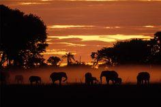 Image of elephants kicking up dust in the Okavango delta, Botswana