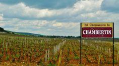 Where serious things begin... #burgundy #chambertin