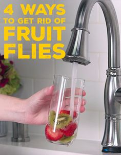 Get rid of those pesky fruity flies with these four tricks.