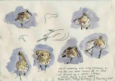 John Walters • Notebook: Curlews on the Teign Estuary