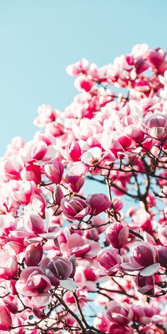 New wallpaper backgrounds photography pink flowers ideas Frühling Wallpaper, Pink Wallpaper Backgrounds, New Wallpaper Iphone, Trendy Wallpaper, Pink Flower Wallpaper, Vintage Flowers, Pink Flowers, Vintage Pink, Clear Blue Sky