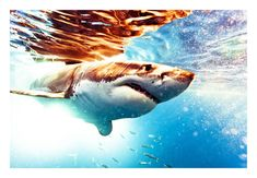 michael-muller-shark