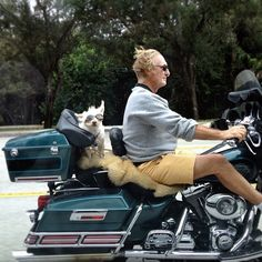 Dog riding on the back of a motorcycle