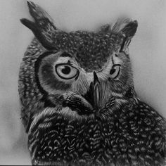 Wildlife Scratchboard Art, Zimmerman, Wildlife, Artist, Animals, Animales, Animaux, Animal Memes, Animal