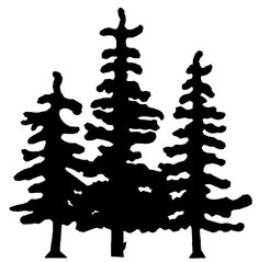 Pine Tree Silhouette Drawings Rc81 pine trees
