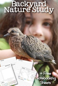 FREE Printable Bird Study and Notebooking Sheets - Homeschool Giveaways Lessons For Kids, Science Lessons, Teaching Science, Teaching Ideas, Nature Activities, Science Activities, Outdoor Activities, Science Topics, Outdoor Learning