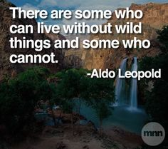 """""""There are some who can live without wild things and some who cannot."""" (Aldo Leopold) ... I am one of those. (AK)"""