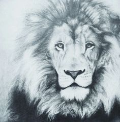 Graphite Pencil Lion Drawing - Taught by Susan Spradlin - Conway High School Art Project