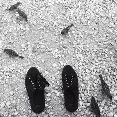 Sirmione #relax #scarpe #shoes #asos #uccellini #littlebirds #passerotti #sparrows #biancoenero #blackandwhite #iphonepic#sirmione