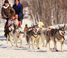 Ga op een slee met sneeuwhonden