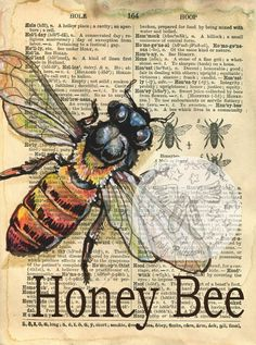 6 x 8 Print of Original, Mixed Media Drawing on an Distressed, Dictionary Page This drawing of a Honey Bee is drawn in sepia ink and created Altered Books, Altered Art, Honey Bee Drawing, Book Page Art, Arte Obscura, Arte Sketchbook, Bee Art, Insect Art, Dictionary Art