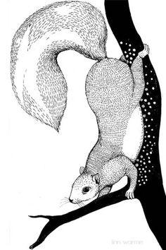 Squirrel in a tree Linn Warme