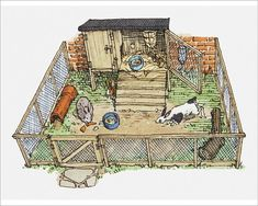 An poster sized print, approx (other products available) - Illustration of pet rabbits in wire enclosure showing hutch - Image supplied by Fine Art Storehouse - Poster printed in Australia Rabbit Wire, Rabbit Run, Rabbit Cages, Meat Rabbits, Raising Rabbits, Rabbit Habitat, A4 Poster, Poster Prints, Rabbit Enclosure