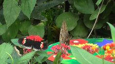 Butterflies at the butterfly paradise in london zoo part 1
