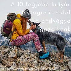 A 10 legjobb kutyás instagram oldal kalandvágyó gazdiknak