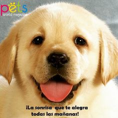 ¡La sonrisa que te alegra todas las mañanas!  #PetsWorldMagazine #RevistaDeMascotas #Panama #Mascotas #MascotasPanama #MascotasPty #PetsMagazine #MascotasAdorables #Perros #PerrosPty #PerrosPanama #Pets #PetsLovers #Dogs #DogLovers #DogOfTheDay #PicOfTheDay #Cute #SuperTiernos