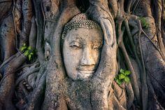 Buddha Head, Fig Tree, Thailand, Stock Photos, Statue, Artwork, Karma, Fantasy, Fotografia
