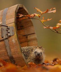 Edwin gagne la confiance des animaux de la forêt pour les photographier dans…