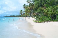 Plage des Salines, sud de la Martinique