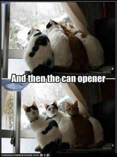 Top 30 Funny Animal Pictures and Jokes #ROFL