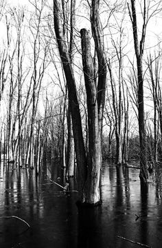 """Check out my art piece """"Spring Melt"""" on crated.com - Guelph Ontario Canada #art #photography #blackandwhite #trees #spring #ice #pond"""