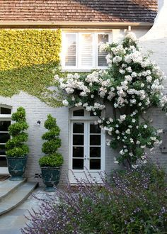 Beautiful home entryway featuring an arched door, gray brick and roses grown over the doorway and across the wall   Design Focus International