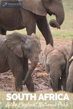 South Africa boasts more wonders than its infamous Kruger including our favorite, Addo Elephant National Park   The Planet D: Adventure Travel Blog