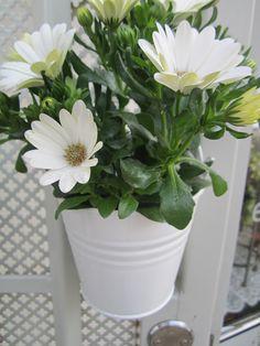 Den lilla blomsterbutiken med det stora Hjärtat Världens Blommor