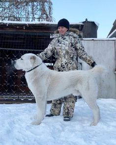 Big Dogs, Cute Dogs, Alabai Dog, Dog Breeds Pictures, Anatolian Shepherd, Awesome Dogs, Types Of Dogs, Rare Animals, Bull Terrier Dog
