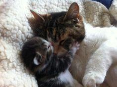 猫の親子 16 - ねこLatte+