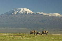 Does it Ever Snow on the African Continent?: Snow-Capped Mount Kilimanjaro, Kenya
