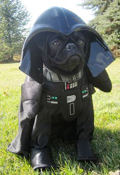 There's Classic Darth Vader again!  It looks too perfect on a black pug Halloween dog costume fall season puppy