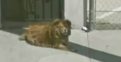 How Google Maps Led To The Serendipitous Rescue Of A Stray Dog In LA