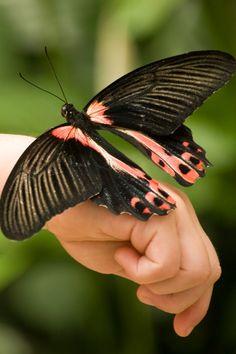 Made a new friend - Day Butterfly Pavillion at Callaway Gardens, Pine Mtn., GA